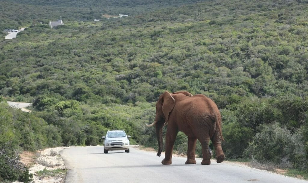 What to Expect from an Addo Elephant Park Safari
