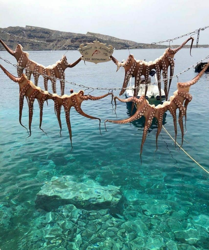 Squids hanged up at Ammoudi Bay, Santorini
